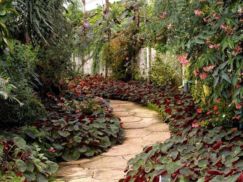 Stone walkway with foliage.