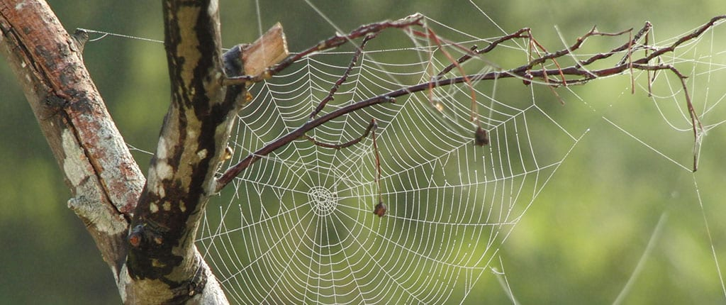 Spider web on branch