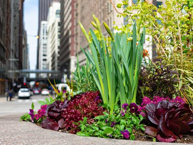 Flower bed on a city sidewalk.