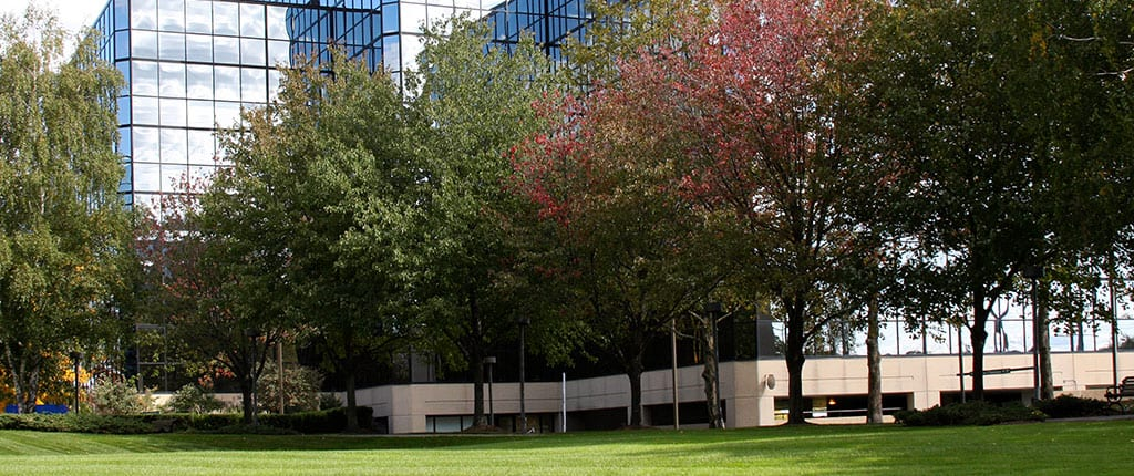 Office building covered by trees